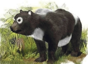 An artist impression of the Tenerife Giant Panda from 11.6 million years ago.