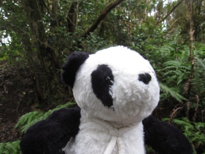 The Panda ran off into the thick forest.