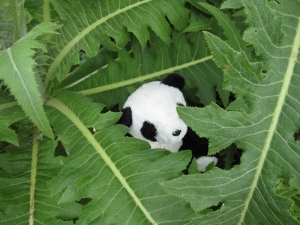 Was this the Tenerife Giant Panda?