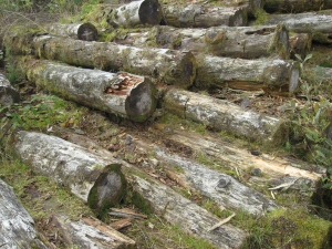 Stack of harvest logs.