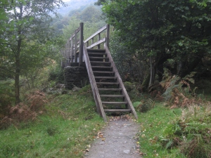 A footbridge on the forest path.