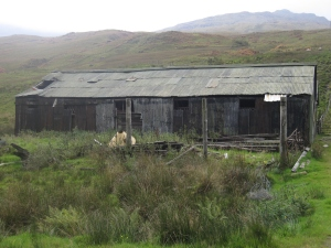 An old shed at Derrydarroch Farm.