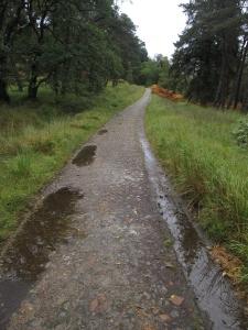 The path passes a plantation.