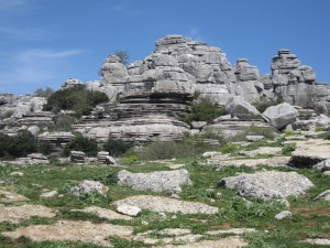 The limestone has formed unusual shapes due to rain and wind.