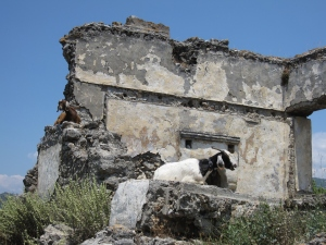 A goat resting in one of the ruins.