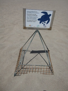 A protected turtle nest.