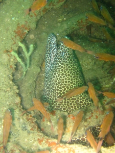 A another Moray Eel spotted.
