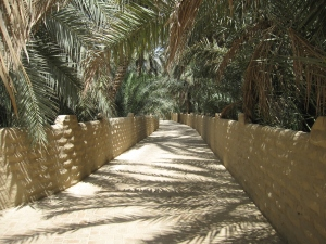 Pathways inside the oasis.