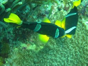 I saw Nemo!